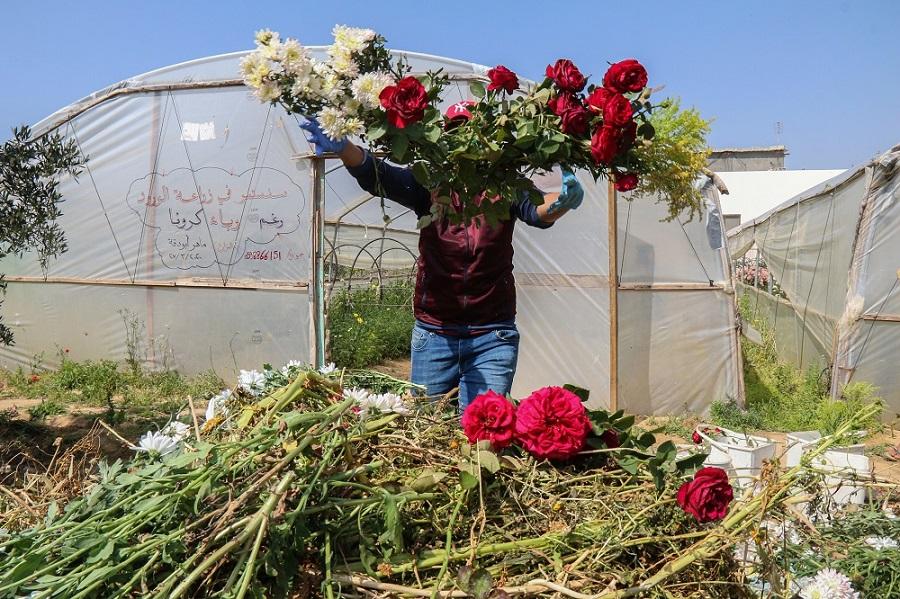 غزة-3.jpg
