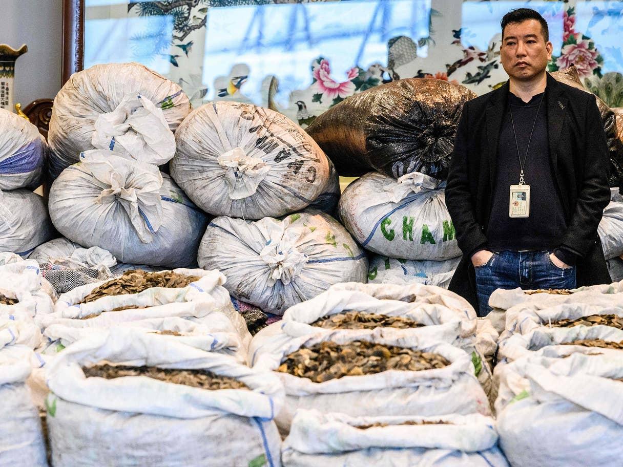 """في مطلع فبراير (شباط) 2020، ساد خوف عالمي من تجارة الحراشف المأخوذة من أحد أنواع """"آكل النمل""""، وصادرت الصين كميات كبيرة منها"""