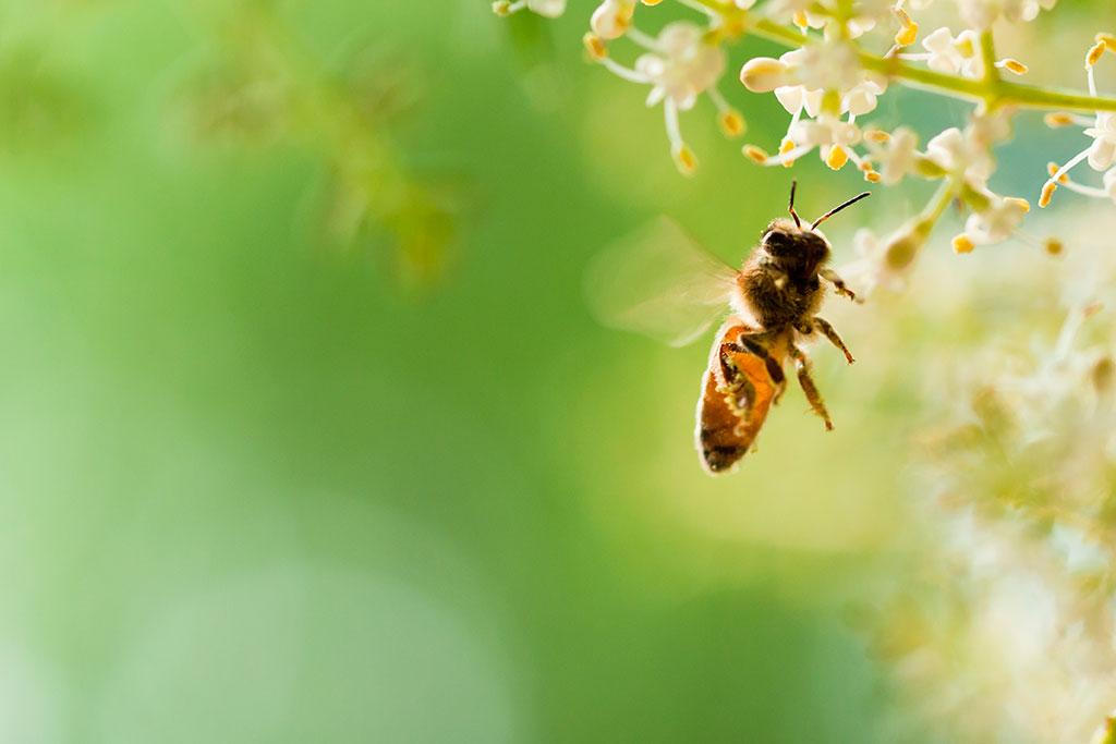 علاقة تفوق الوصف بين الحشرات المفيدة واستدامة نُظُم البيئة والحياة