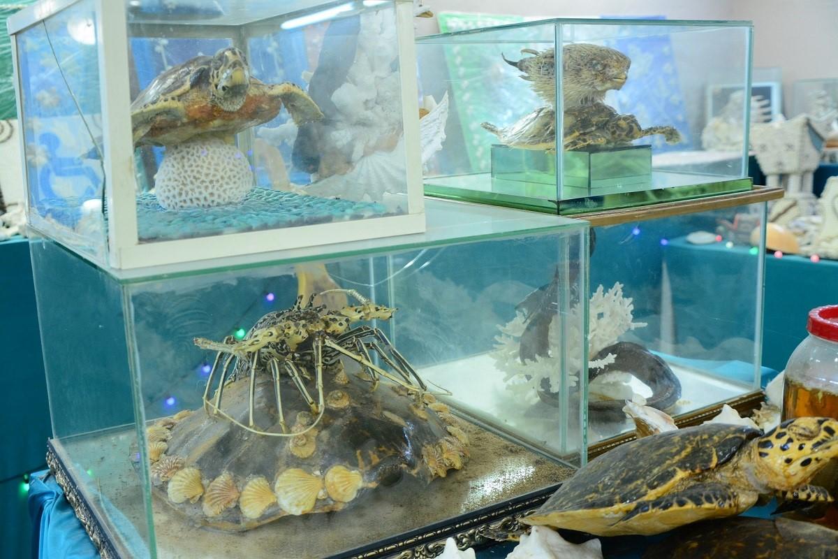 المتحف البحري في جزر فرسان وجهة للسياح (اندبندنت عربية).jpg