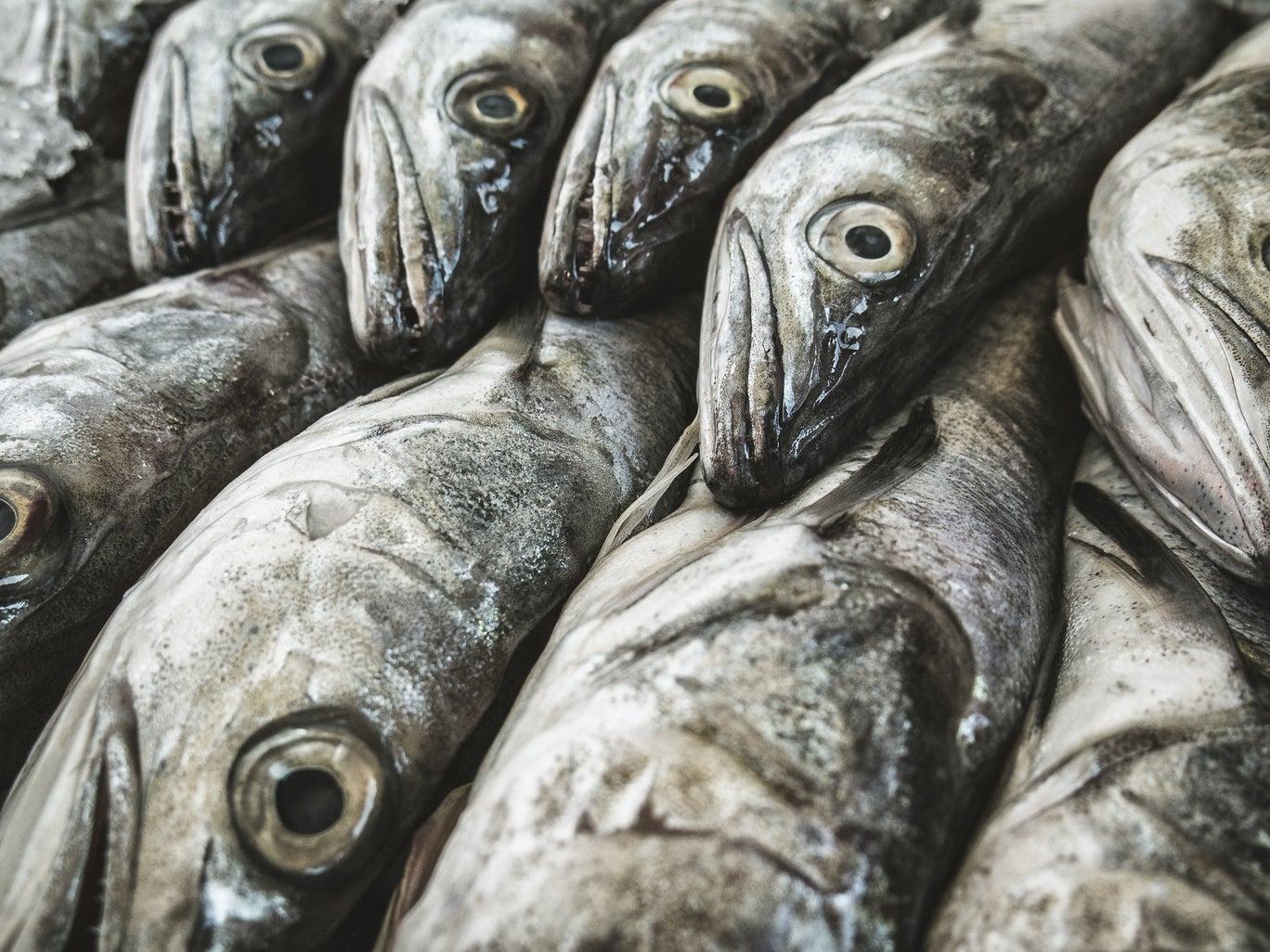 ربما تختفي الأسماك ذات يوم عن موائد مواطني المملكة المتحدة
