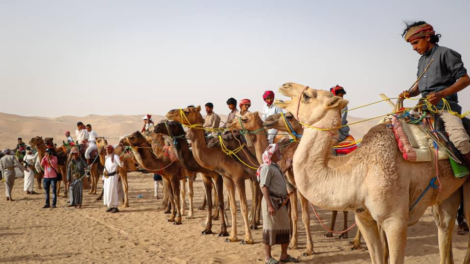 تشكل الجِمال عنصرا مهماً في مهرجان تراث عسيلان.
