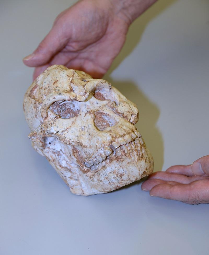 fossil skull 1 reuters.JPG
