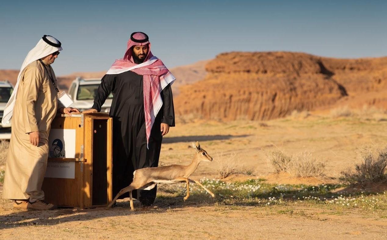 Prince Mohammed Bin Salman (SPA).jpg