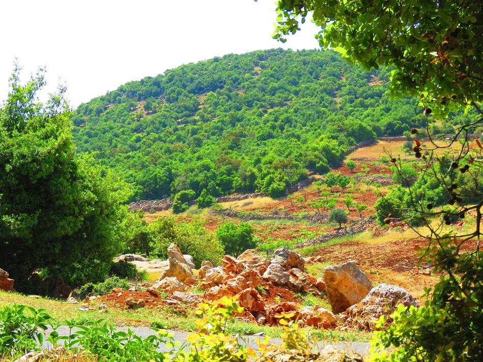 أقرت غمّان قانوناً يقتطع 15 في المئة من عوائد بيع الكربون لصالح صندوق حماية البيئة (وزارة الزراعة الأردنية)