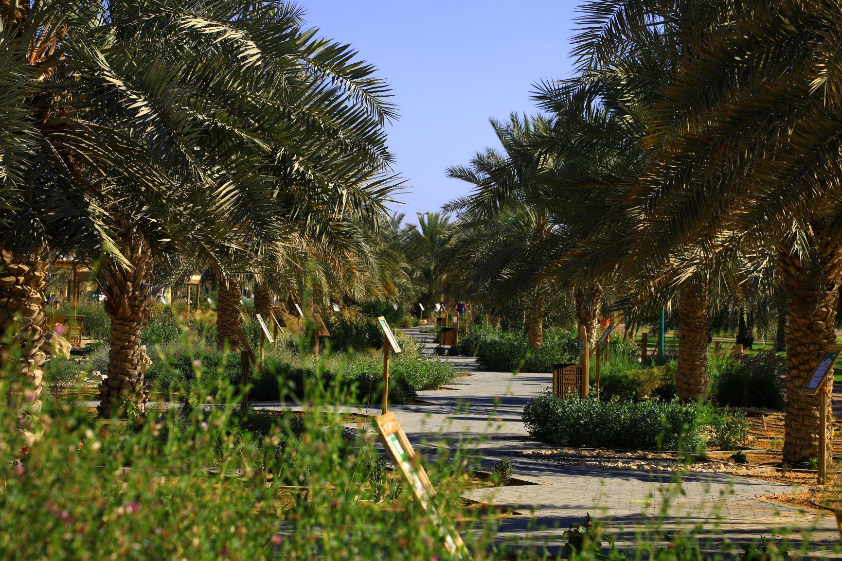 سجلت الإمارات زيادة في إجمالي حجم الانبعاثات الكربونية بلغت 8.708 أطنان (وام)