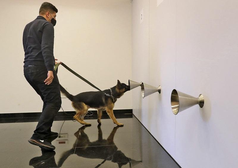 dogs covid afp 2.jpg