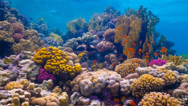 A colourful underwater world - Al Wajh Lagoon kaust.jpg