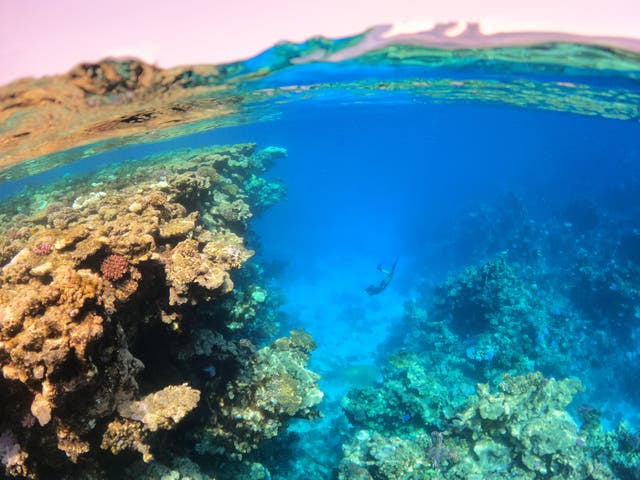 red sea attraction.jpg